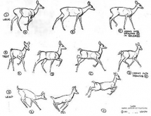 BambiModelSheet2
